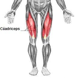 mejores-ejercicios-para-cuádriceps-1