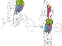 musculos trabajan con el peso muerto